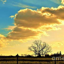 Sunset Color Landscape by Suzanne Wilkinson