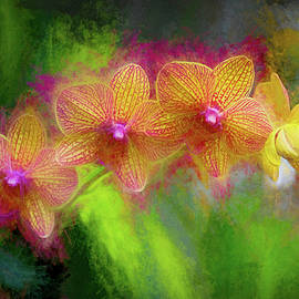 Sunset Doritaenopsis orchid by George Moore