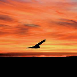 Sunset Flight by Daniel Beard