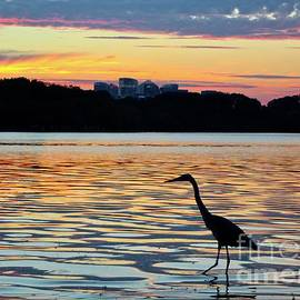 Sunset from the Jefferson Memorial 6 by Ann Brown