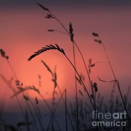 Sunset Grasses 1 by Paul Davenport