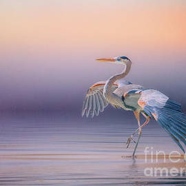 Sunset Heron by Brian Tarr