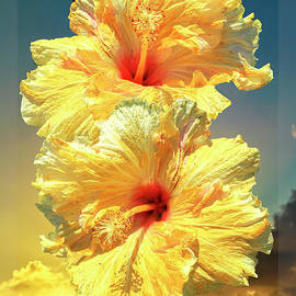 Sunset Hibiscus by Christina Ford