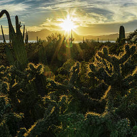Desert vegetation at sunset, Sonora Mexico by Fernando Blanco Farias