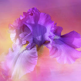 Sunset Iris by Terry Davis
