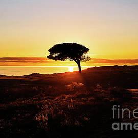 Sunset on Bandon Coast by Scott Pellegrin
