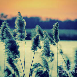 Sunset on the Marsh with Grasses Movement Nature Landscape Photo by Melissa Fague