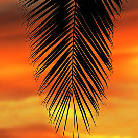 Sunset Palm 3 by Sue Cullumber