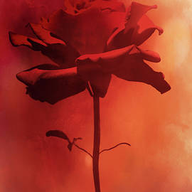 Sunset Rose by Diane Schuster