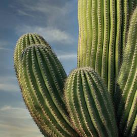 Sunset Saguaro Profile by Stephen Stookey