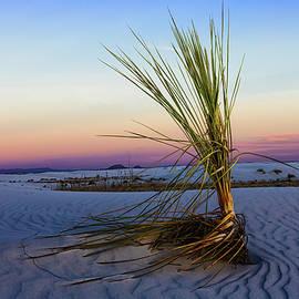 Sunset Sands by Jason Roberts