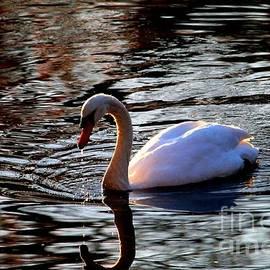 Sunset Swan 2