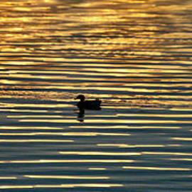 Sunset Swim by Gayle Deel