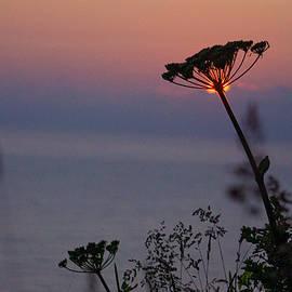 Sunset Through a Wildflower by Varma Penumetcha