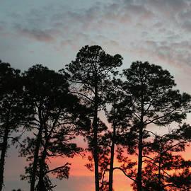 Sunset through the Pines by Donna Kaluzniak
