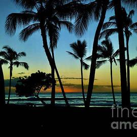 Sunset Thru the Palms by Craig Wood
