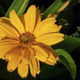 Sunshine Flower by Rebekkah Burtcher