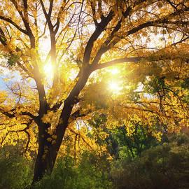 Sunshine Through The Trees  by Saija Lehtonen