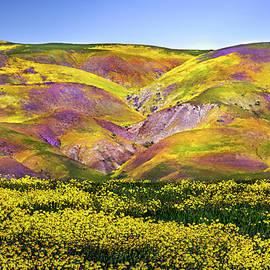 Superbloom Hills Above Carizzo Plain, California by Brian Tada