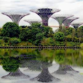 Supertrees Of Singapore by Toni Abdnour