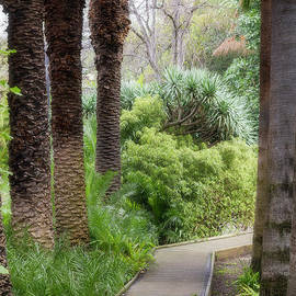 Supreme Court Gardens, Perth, Western Australia by Elaine Teague