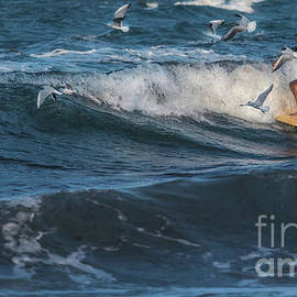 Surfing With The Birds by Flo Photography