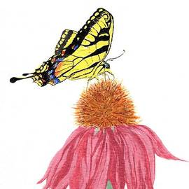 Swallowtail butterfly on coneflower by Kristen McNally