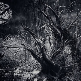 Swamp Roots by Sue Capuano