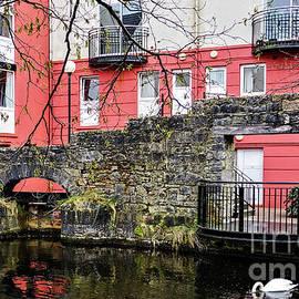 Swan in Ireland by Raven Deem