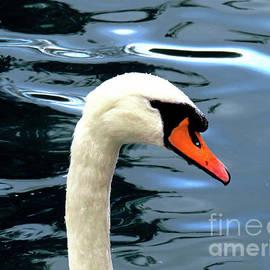 Swan in Profile by Kathryn Jones