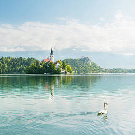 Swan, Lake Bled by Justin Foulkes