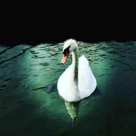 Swan Lake by Lisa Soots