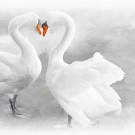 Swans in Love by Maria Keady