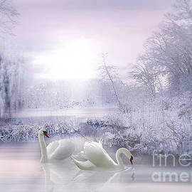 Swans in Winter by Morag Bates