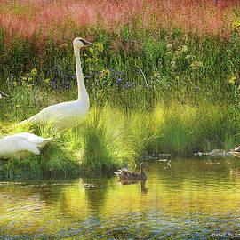 Swans On The Elk Refuge by R christopher Vest