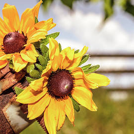 Sweet Flowering Fumes by Jim Love