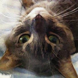Sweet Kitty Watercolor