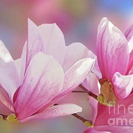Sweet Pink Magnolia Blossoms by Regina Geoghan