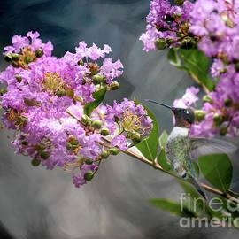 Sweet Smell of Flowers by Debbie Morris
