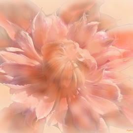 Sweet Sunrise Clematis by Angela Davies
