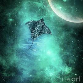 Swim The Universe by Kelley Freel-Ebner