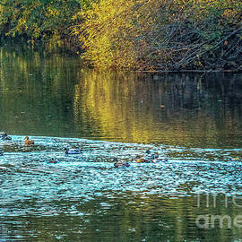 Swimming In The Afternoon by Robert Bales