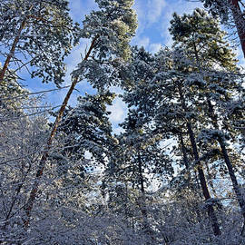 Skylight into the frosted forest by Tibor Tivadar Kui