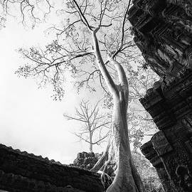 Ta Prohm Beauty in black and white by Sinsee Ho