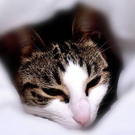 Tabby cat by Nicholas Christiansen