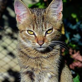 Tabby kitten embarrassed by sunlight by Tibor Tivadar Kui