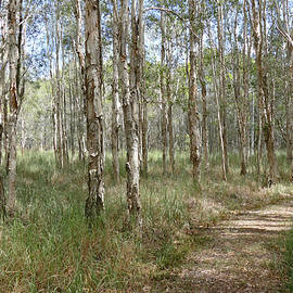 Take a Walk in the Paperbark Forest by Maryse Jansen