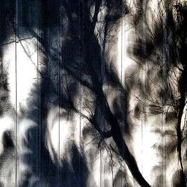 Tales of Light and Dark by Lauren Leigh Hunter Fine Art Photography