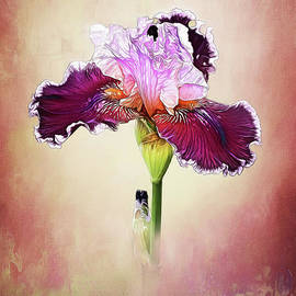 Tall Bearded Iris by Warrena J Barnerd