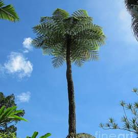 Tall Scaly Tree Fern, Cairns Botanic Gardens, Queensland. by Rita Blom